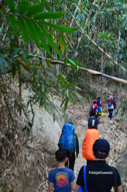 Papa pendaki memasuki Hutan Bambu di jalur pendakian Gunung Lembu | JelajahSuwanto