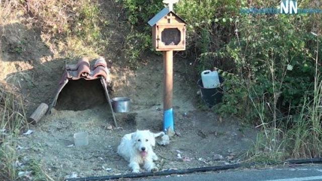 Ο Χάτσικο της Ναυπάκτου: Σκύλος ζει δίπλα στο εικόνισμα του αφεντικού του (video)