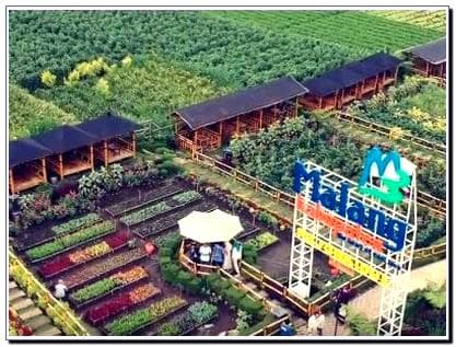 Desa Wisata Pujon Kidul Alamat Rute Dan Cafe Sawah Wisatamantul Com