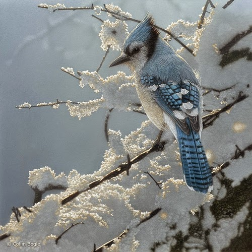 20-Blue-Jay-Collin-Bogle-Animal-Wildlife-in-Art-www-designstack-co