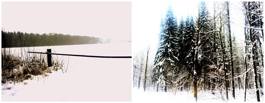 schneebedeckter Wald Winterlandschaft