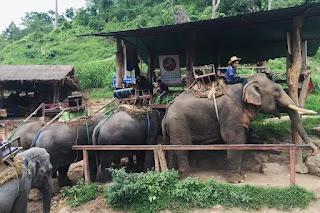 Elephant Training Center