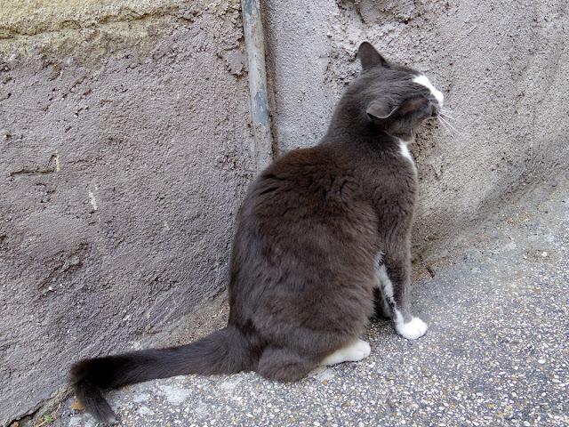 ローマの野良猫