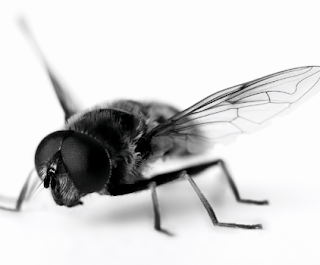 Cara Mudah Mengusir Lalat Agar Tak Kembali Lagi