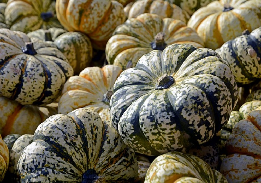 Pumpkin for Diabetes and Cancer Prevention