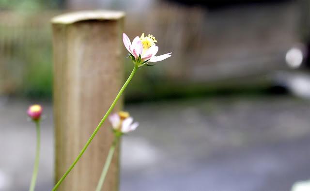 Foto Macro Dengan Camera Digital Canon EOS 700D