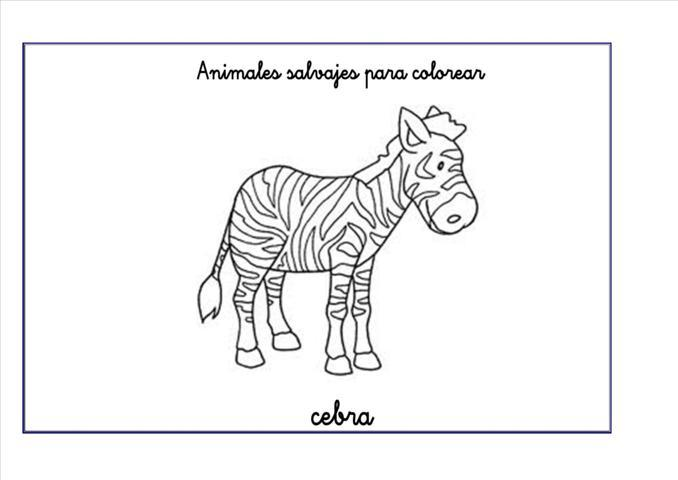 Dibujos A Color De Animales Salvajes: Blog MegaDiverso: Animales Salvajes Para Colorear