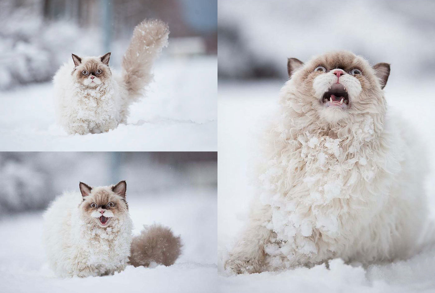 persian cat with it first time experienced with the snow