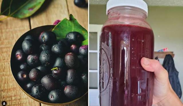 जामुन के सिरके के फायदे व जामुन का सिरका घर में बनाने की विधि   Benefits of Jamun Sirka Vinegar and  Making Method in Hindi