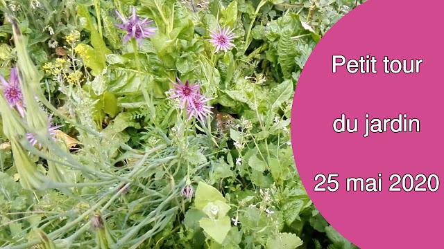 Petit tour du jardin en permaculture 25 mai 2020 (vidéo)