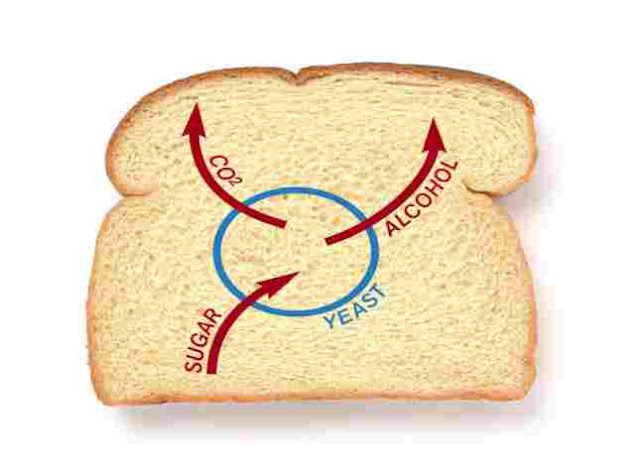 What ingredient in bread causes it to rise?