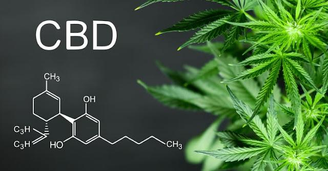 best (Create new) dosage (Create new) OTC benefits of cbd cbd as medicine cbd for anxiety cbd gummies cbd hemp cbd oil for anxiety cbd oil for pain cbd oil joe rogan cbd vs thc cbd 고르기 does cbd work what is cbd