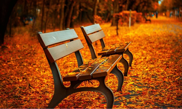 Autumn. A bench on fallen leaves