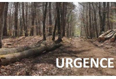 Faut-il vraiment s'alarmer des coupes en forêt de Fontainebleau ?