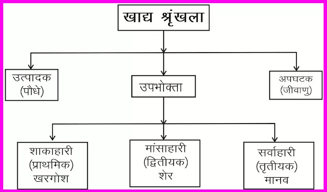 11 class Geography Notes In Hindi Chapter 15 Life on Earth