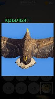 389 фото в воздухе птица расправила свои крылья 15 уровень