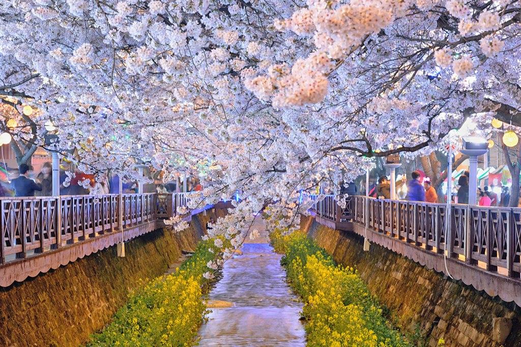 Jinhae Cherry Blossom Festival – Gunhangje 2018