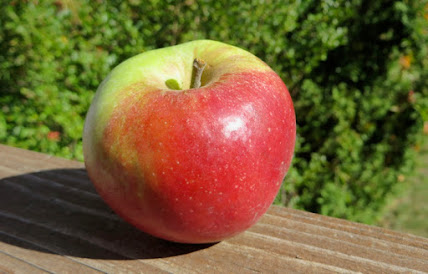 Ribbed apple with reb blush partially over green