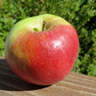 A red-blushed apple