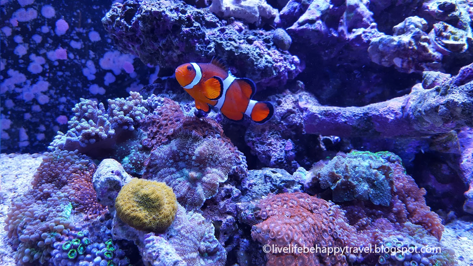 Live life be happy tropical indoor garden and salt water for Live saltwater fish