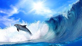 Dolfijn in de golven van de zee