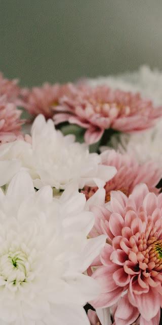 Ảnh nền hoa đầy thơ mộng
