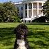 Οι προεδρικοί σκύλοι
