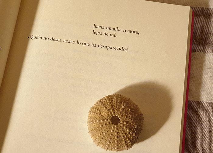 Un poema de Valeria Correa Fiz