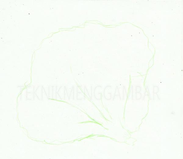 Cara Menggambar Sayuran Dengan Hasil Seperti Aslinya Teknik Menggambar