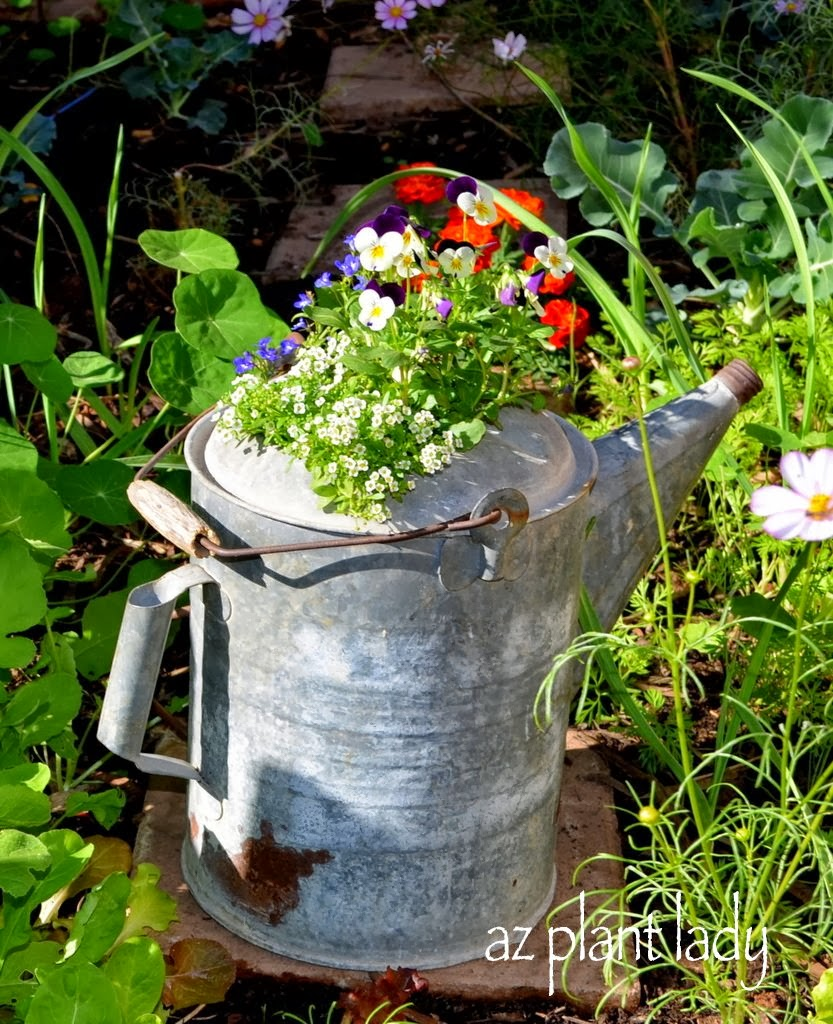 Unusual Plant Containers Ramblings From A Desert Garden