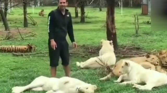 Nyaris Diterkam Macan Tutul, Pria Ini Diselamatkan Harimau