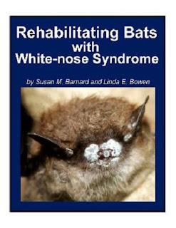 http://www.batsrule.info/2016/04/rehabilitating-bats-with-wns.html