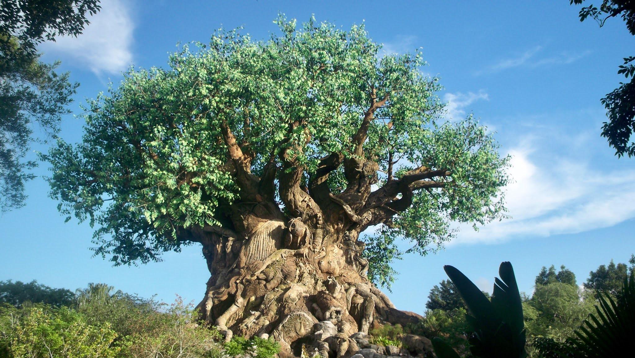 árvore animal kingdom