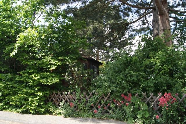 Grundstücksgrenze mit Holzzaun Haselnuss und Dünenrose