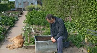 Planting Flat Leaf Parsley