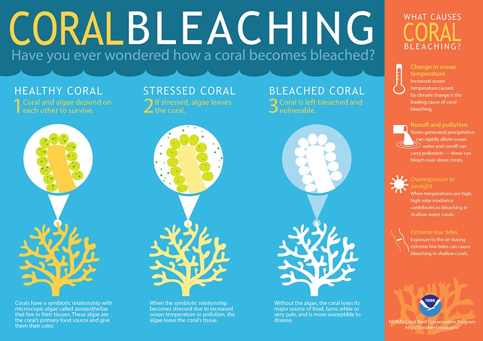 CORAL BLEACHING AND HUMAN INTRUSION IN CORAL REEFS