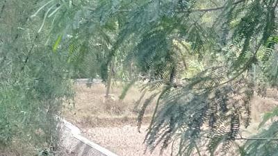 CV.Remaja Desa Realisasikan Pembangunan Irigasi Sungai Cimulek