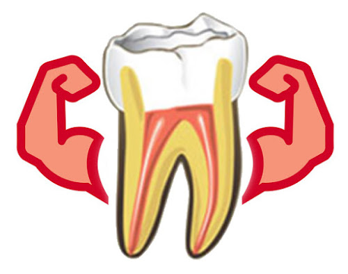 durability of root canal treated tooth