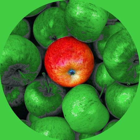 Kuvassa kiiltäviä vihreitä omenia ja niiden keskellä yksi värikkään punainen  kesäomena