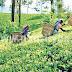 பெருந்தோட்ட தொழிலாளர்களுக்கு நாளாந்தம் ஆயிரம் ரூபா வேதனத்தை வழங்குவதற்கான திட்டம்