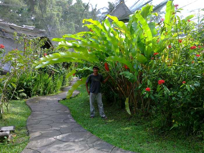 Garden with different types of plants in Bali Butterfly Park