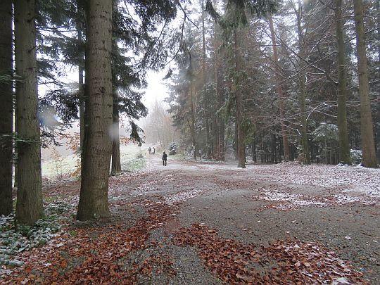Droga, gdzie dołącza czarny szlak ze Styru.