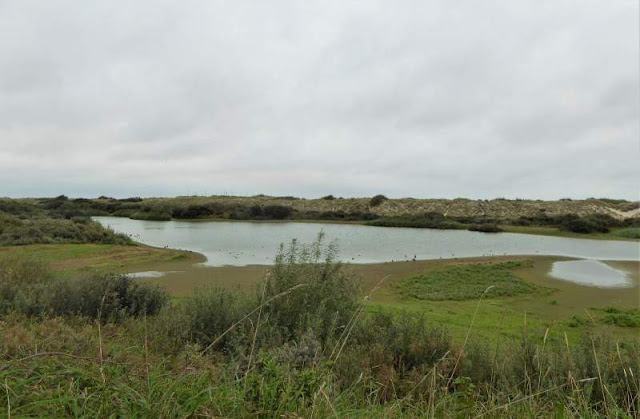 stagno di Renvogelveld a Texel