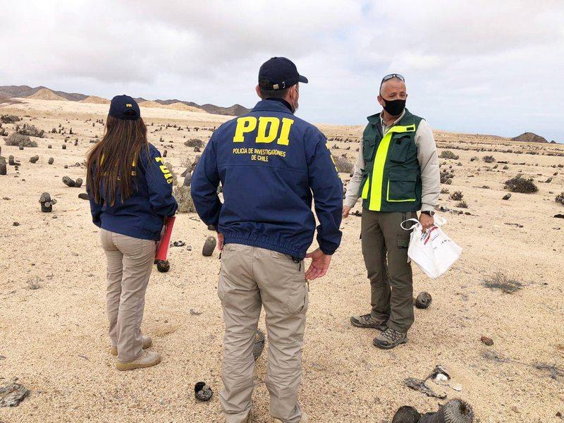PDI detecta tráfico de cactus chilenos a Europa