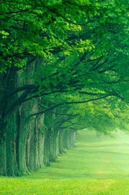 Tree Nature HD wallpaper