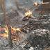 Apiário é destruído por incêndio nas proximidades da Usina Santa Rita