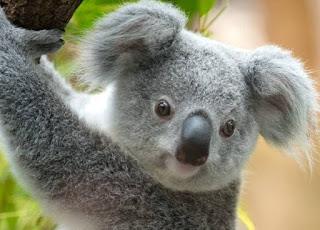Contoh Spesies Endemik di Dunia