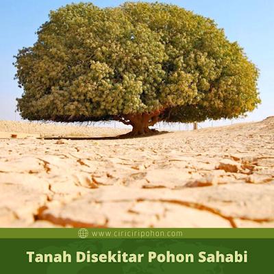 Tanah Di Sekitar Pohon Sahabi