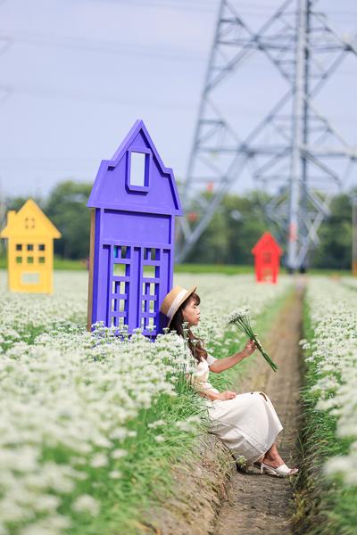 彰化埤頭韭菜花田白色花海就像雪景,彩虹、小屋,夢幻美照輕鬆拍
