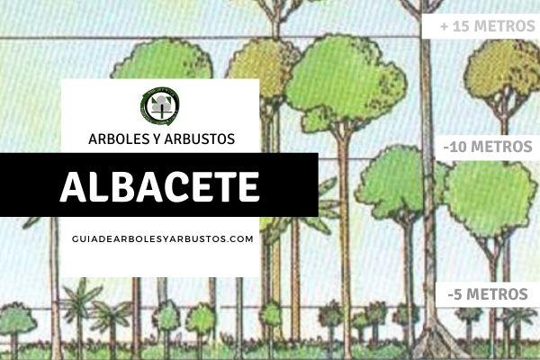 Arboles y arbustos de la provincia de Albacete, España, por estratos.